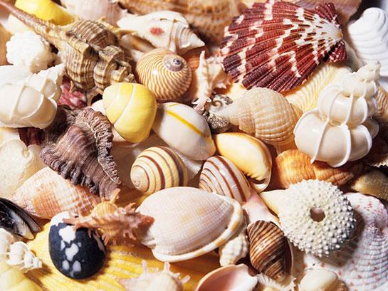 「貝殻 海岸」の画像検索結果